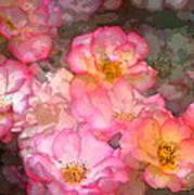 Rose 210 Poster by Pamela Cooper