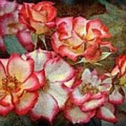 Rose 305 Poster
