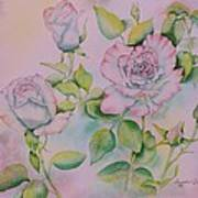 Rose Bloom Poster