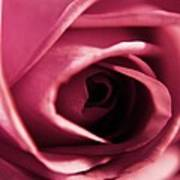 Rose Bud Petals Poster