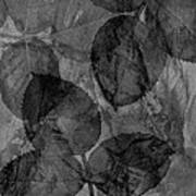 Rose Clippings Mural Wall - Black And White Poster