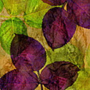 Rose Clippings Mural Wall Poster