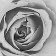 Rose Digital Oil Paint Poster