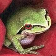 Rose Frog Poster