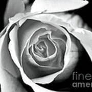 Rose In Black And White Poster