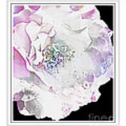 Rose In Pastels Poster