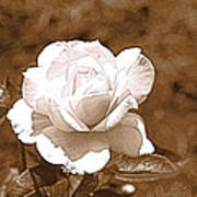 Rose In Sepia Poster by Victoria Sheldon