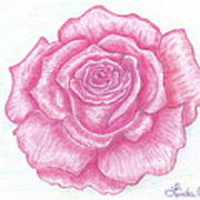 Rose Sketch  Poster