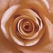 Rose Spiral 3 Poster by Kim Lagerhem