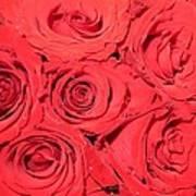 Rose Swirls Poster