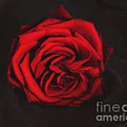 Red Rose On Black Poster