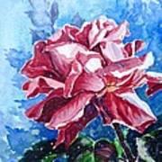 Rose Poster by Zaira Dzhaubaeva