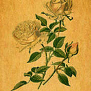 Roses Are Golden Poster