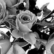 Roses Black And White Poster