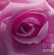 Roses Have Ruffles And Ridges Poster