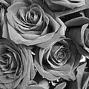 Roses On Your Wall Black And White  Poster