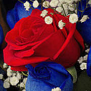 Roses - Red White And Blue Poster