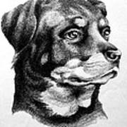 Rottweiler Devotion Poster by Patricia Howitt