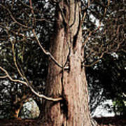 Roukenglentree Poster