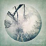 round treetops I Poster by Priska Wettstein