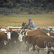 Cattle Round Up Patagonia Poster