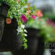 Row Of Hanging Baskets Shallow Dof Poster