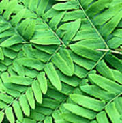Royal Fern  Frond Detail Poster