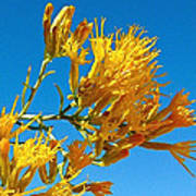 Rubber Rabbitbrush Off Hole-in-the-rock Road In Grand Staircase Escalante National Monument-utah Poster