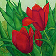 Ruby Red Tulips Poster