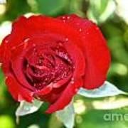 Ruby Rose Diamond Dust Poster