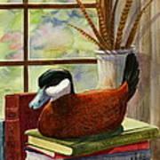Ruddy Duck Decoy Poster