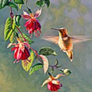 Rufous And Fuschia Poster