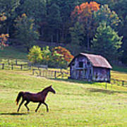 Running Horse And Old Barn Poster