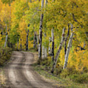 Rural Forest Service Road Poster