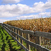 Rural Landscape With Fence Poster