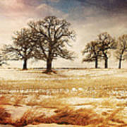 Rural Oaks Poster