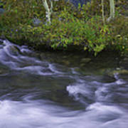 Rushing Stream And Creek Bank - Eastern Sierra Poster