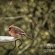 Rustic Cardinal Poster
