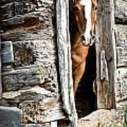 Rustic Horse Scene Poster