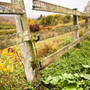 Rustic Landscapes - Broken Fence Poster by Gary Heller