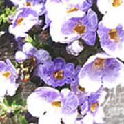 Rustic Planter Box Poster