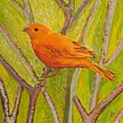 Saffron Finch Poster