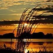 Sage Grass Sunset Poster
