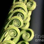 Sago Palm Leaf - 3 Poster