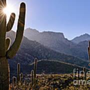Saguaro Cacti And Catalina Mountains Poster