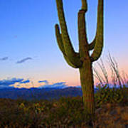 Saguaro Dusk Poster by Mike  Dawson