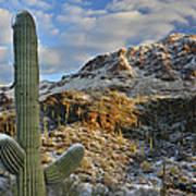 Saguaro National Park Winter Morning Poster