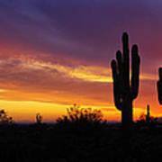 Saguaro Sunset II  Poster
