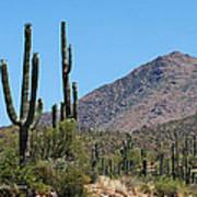 Saguaros And Mountain Poster
