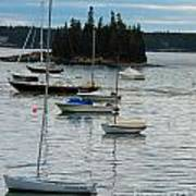 Sailboats In Seal Harbor   Poster